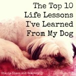 The Top 10 Life Lessons I've Learned From My Dog