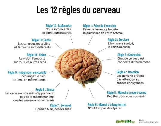 12-regles-cerveau-petit1