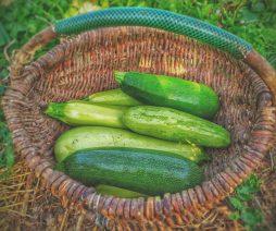 Cucumber | Vegetables For Health