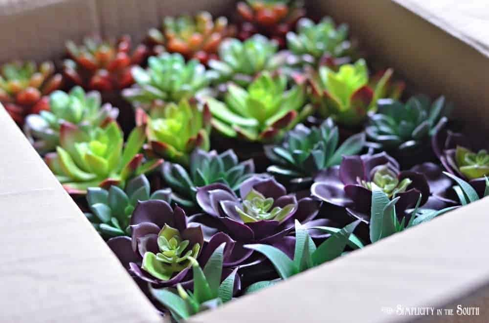 Faux succulents bought by the case at Dollar Tree. This blog post has the link to order them.