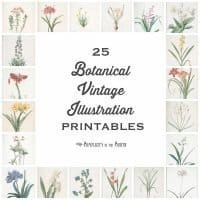 25 Vintage Botanical Illustrations: Free Printable Art