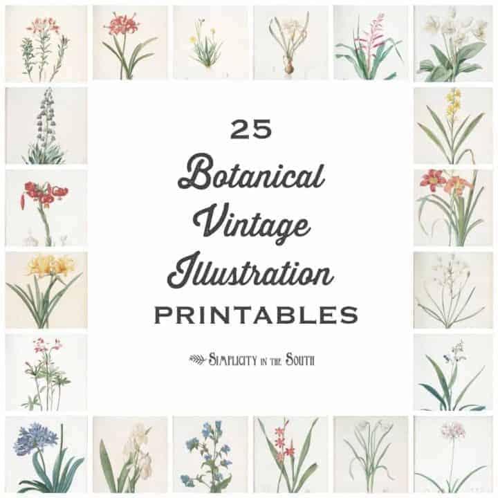 25 Botanical Vintage Illustration free printables for your art gallery