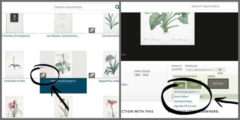 how to select and print free public domain botanicals.