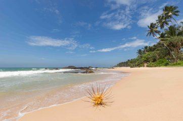 Strand_Sri_Lanka