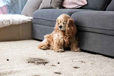 How to Care for a Wool Carpet