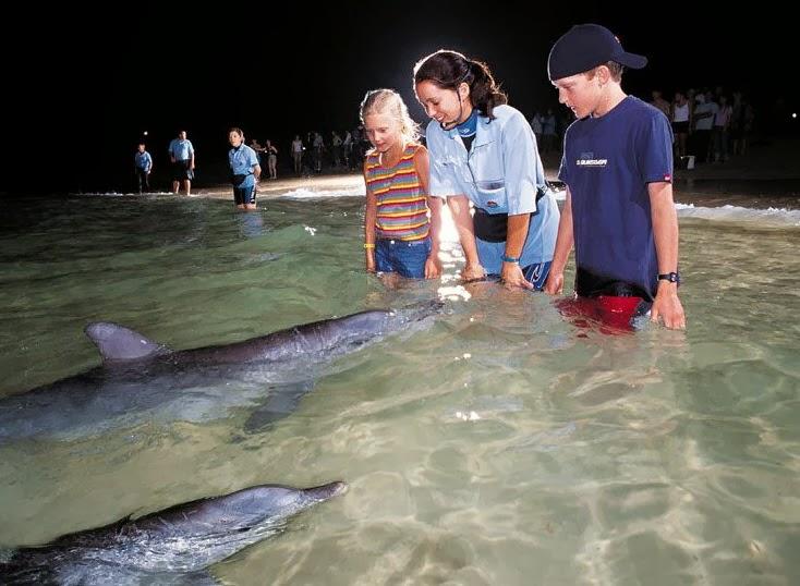 澳洲黃金海岸海豚島