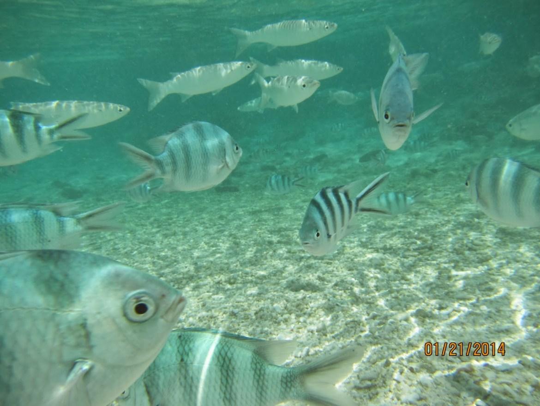 海邊的魚好多~~這是女兒用水底相機拍的