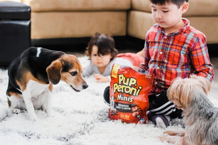 How to Encourage Bonding with Pets and Kids