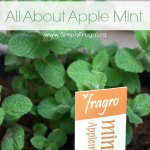 All About Apple Mint