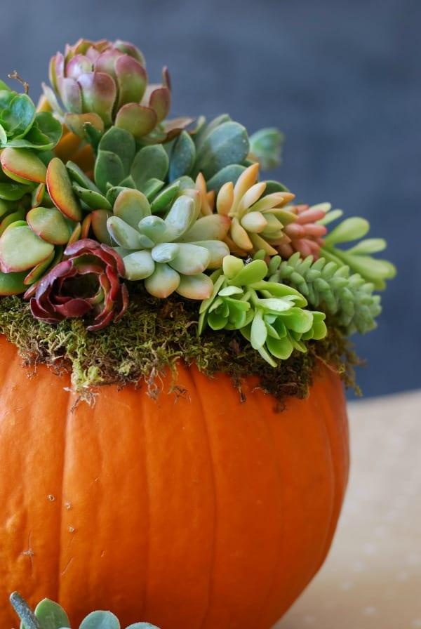#DIY: Pumpkin Succulent Harvest Arrangement {tutorial via: simplyhappenstance.com}