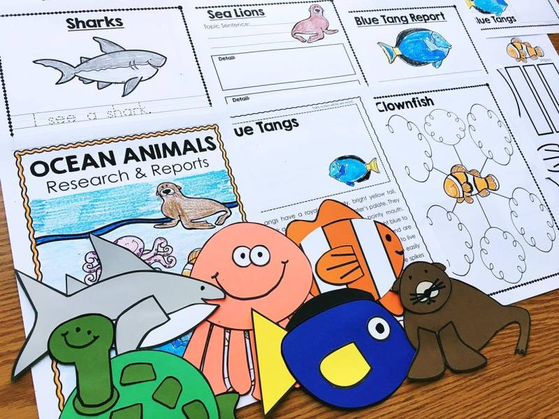 Ocean Animals Research Unit