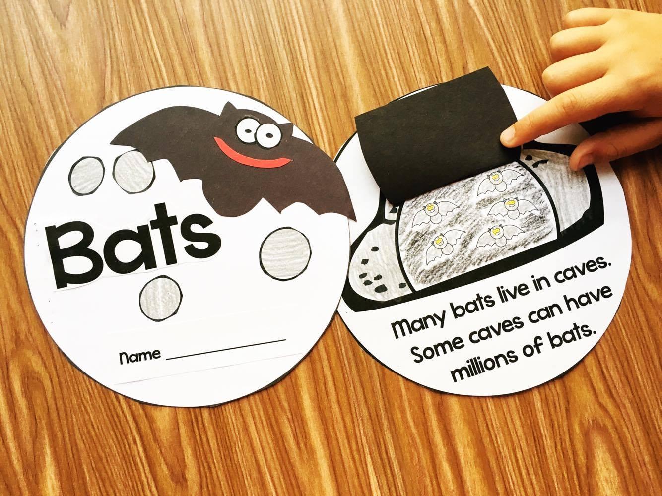 Bat Amp Spider Videos For Kids