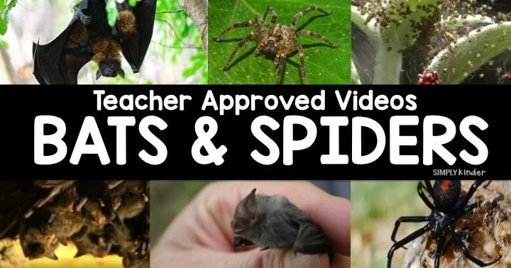 Teacher Approved Bat & Spider Videos List for Kids