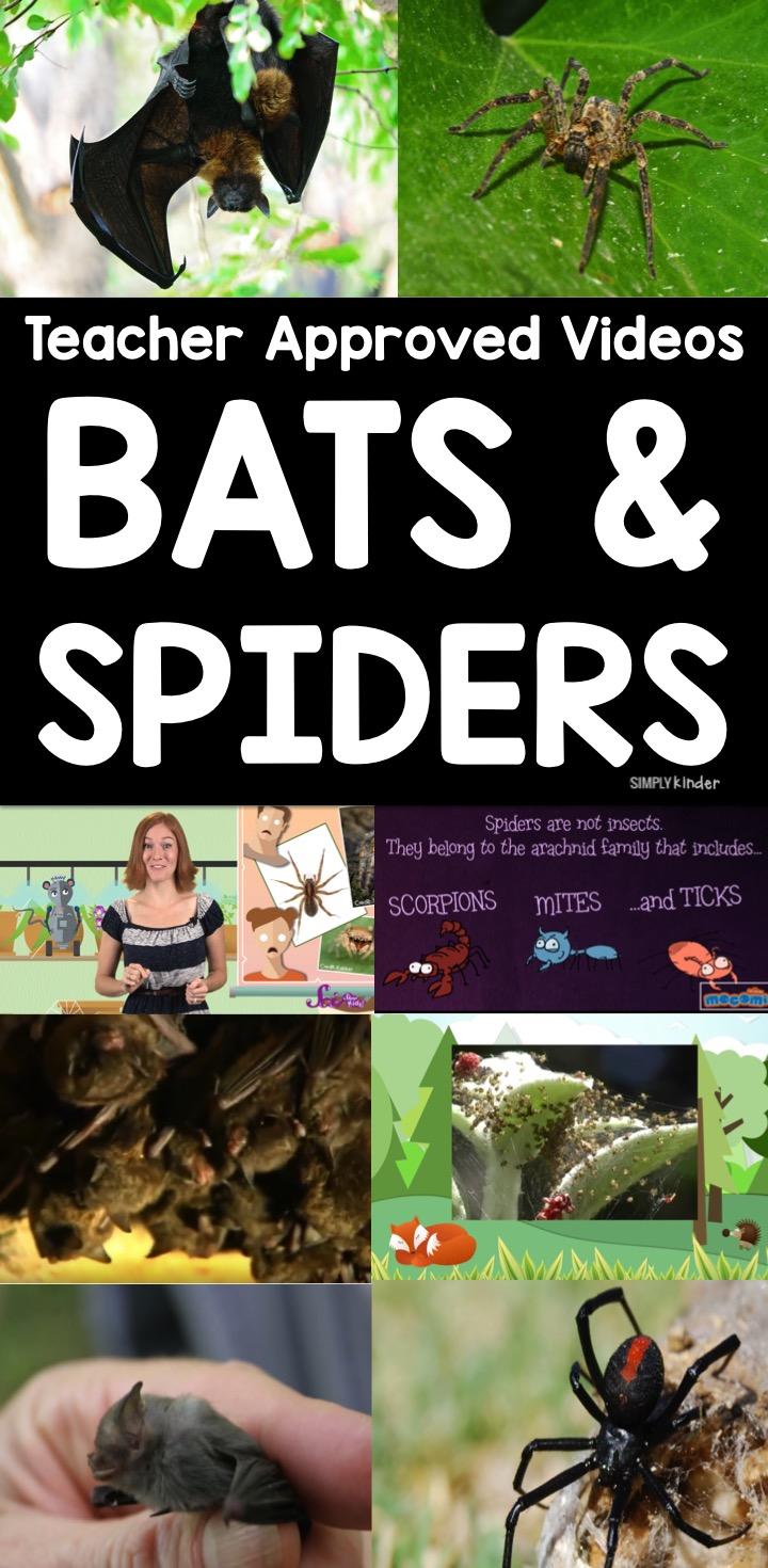 Teacher Approved Bats & Spiders Video List for Kids