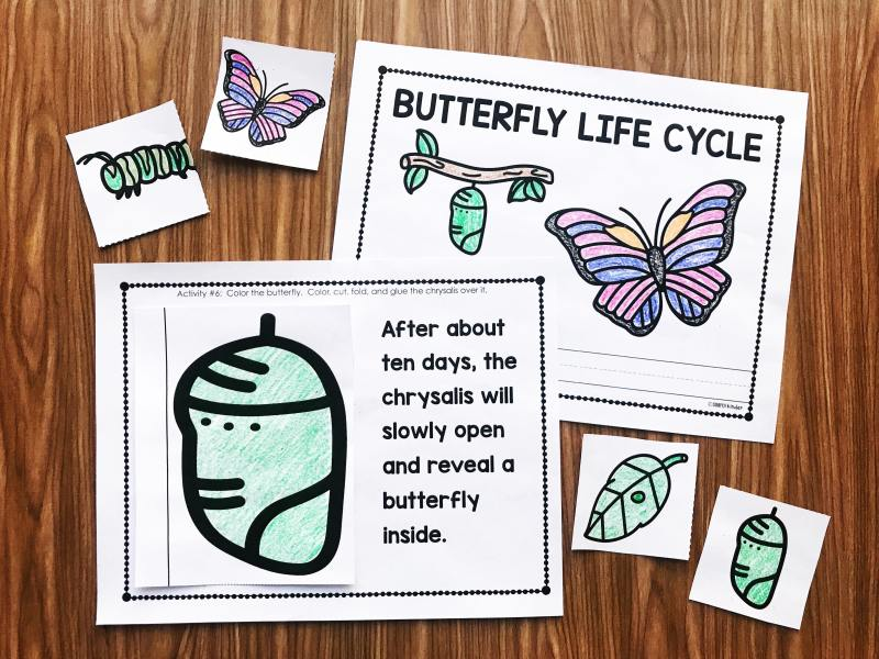 Your preschool, kindergarten, and first grade students will love this interactive Butterfly Life Cycle book from Simply Kinder.