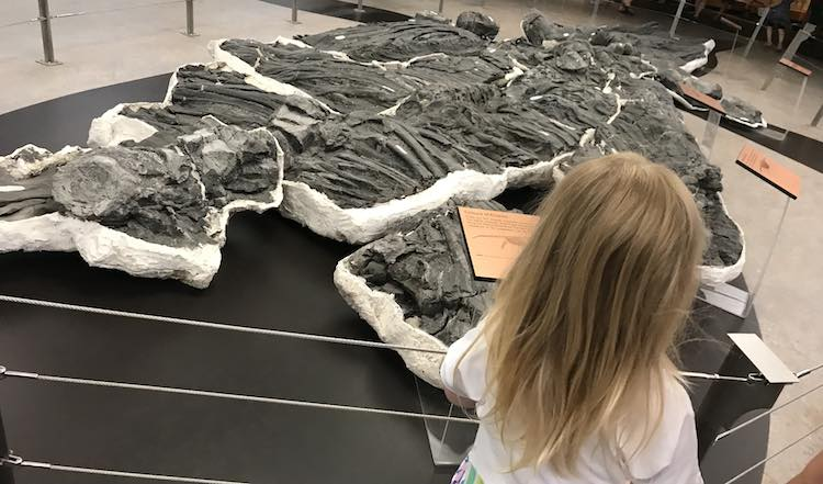I also loved the display showing how the dinosaur skeleton can be in different pieces of rock.