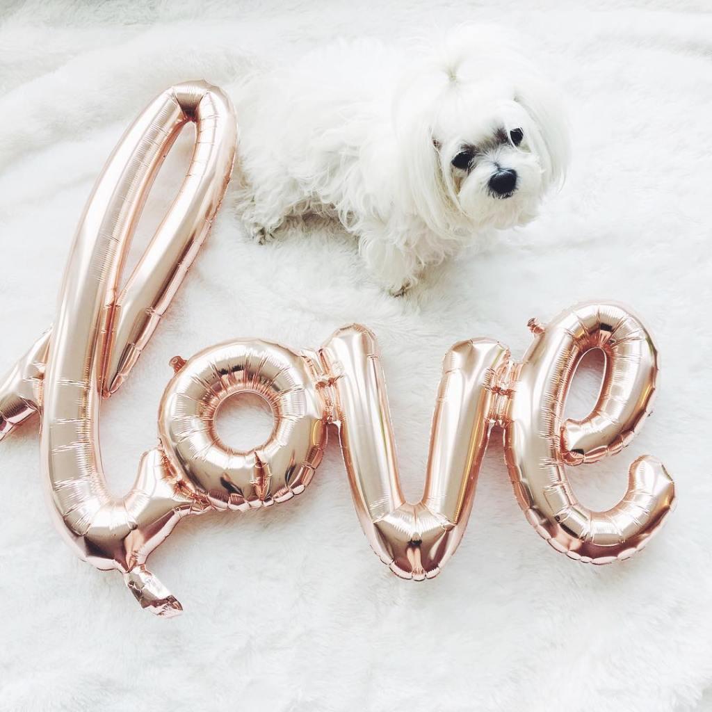 One week until Valentines Day! My little gremlin puppy absolutelyhellip