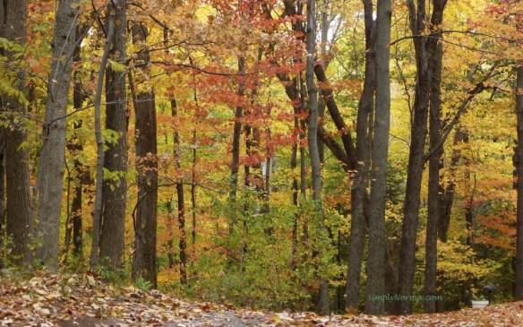 2012 Autumn Colors
