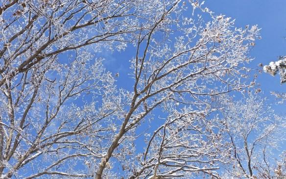 Minnesota Sun February