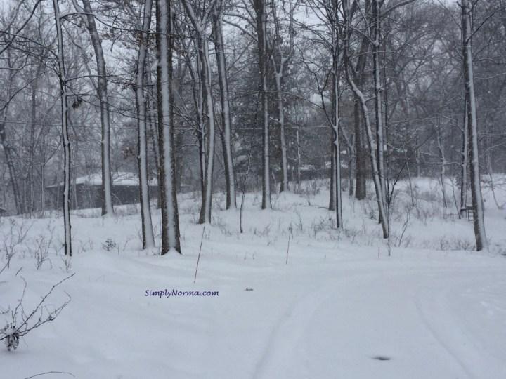 Minnesota Winter Trees