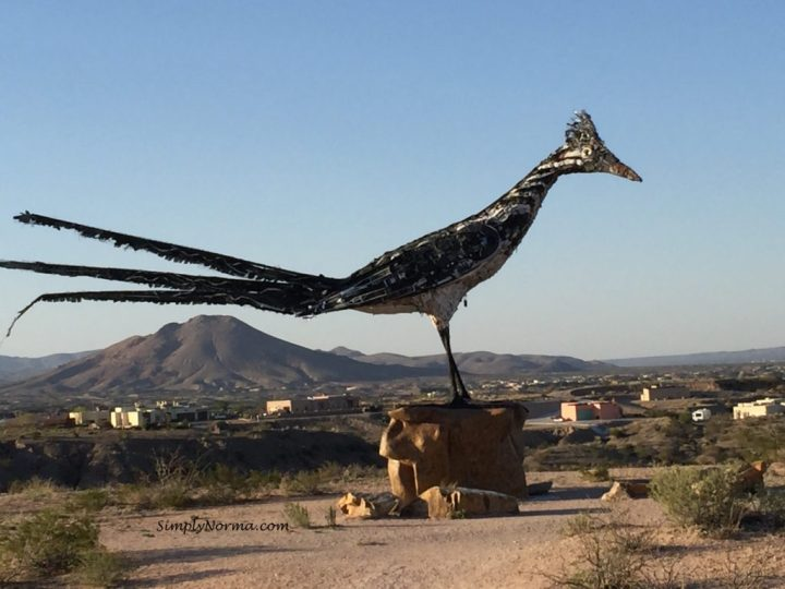 Las Cruces, New Mexico Roadrunner
