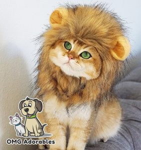 Shop for cat costumes online with Simply Pets Review of lion mane costume for cats and dogs for 2018