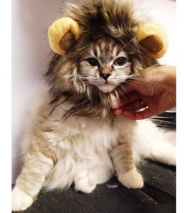 Halloween Pet Costume for Cats are good for parties and special occasions, too.