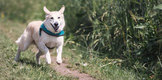 3 Remedies to Calm Your Nervous Dog