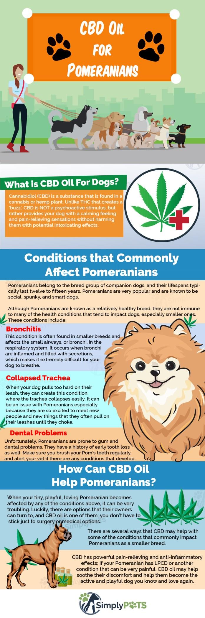 CBD Oil for [POMERANIANS] How Cannabis Hemp Tincture Can