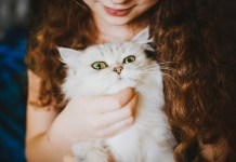 Is CBD Oil Safe For Cats
