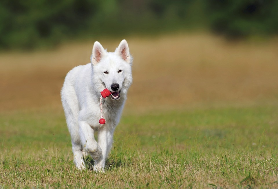 CBD Oil for Dogs with Pancreatic Cancer - Simply Pets