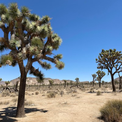 One-Day Trip to Joshua Tree National Park