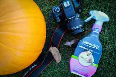 fall photos, family photos, stainmaster, carpet cleaning, photo prep, dog, muddy paws