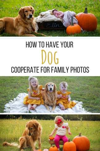 fall photos, family photos shoot, stainmaster, dogs in photo shoots, dog photos