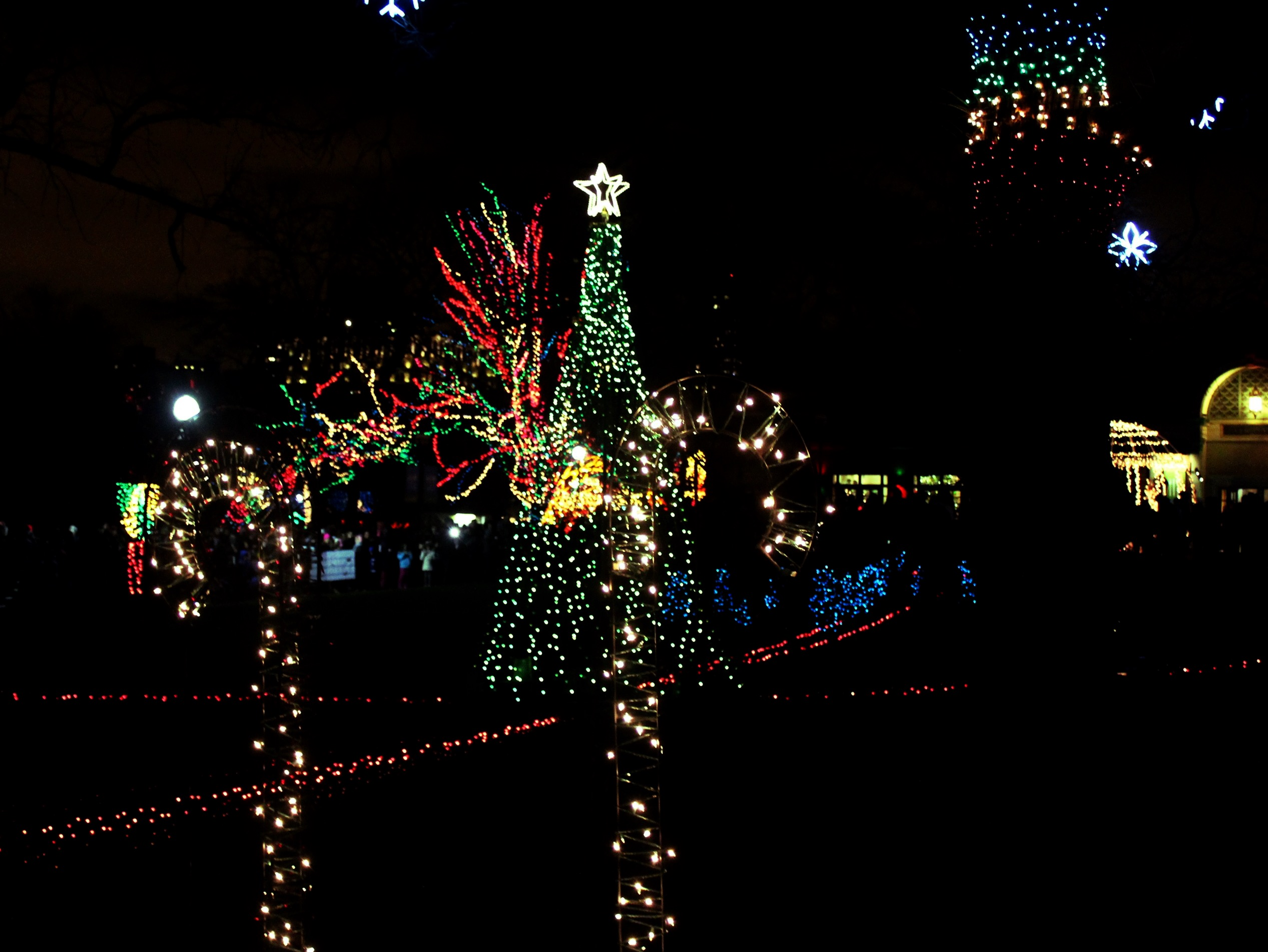 Christmas Lights Zoo