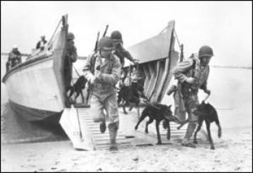 War Dogs on Guam.