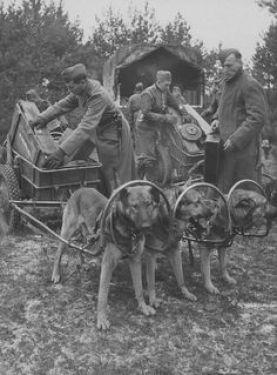Draft Dogs.