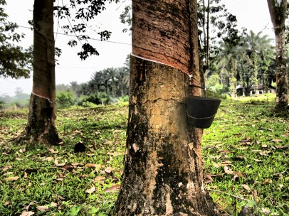 What Is Rubber And Where Does It Come From Part 1 Simply Stamps How To
