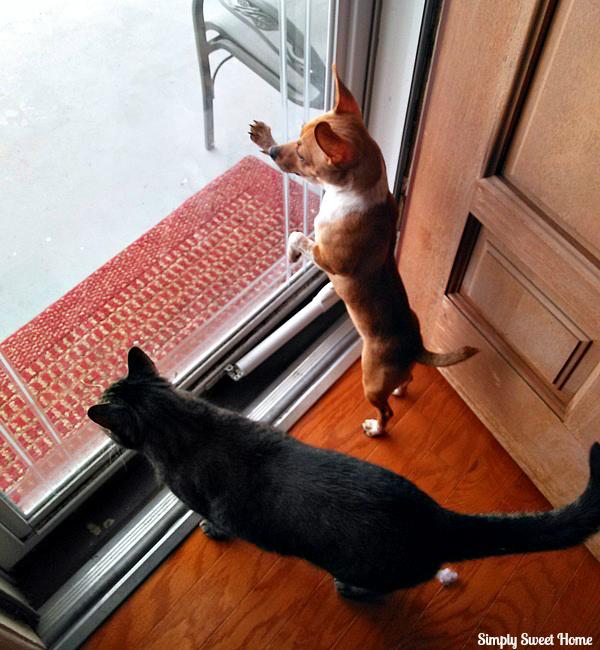 Animals Snowed In