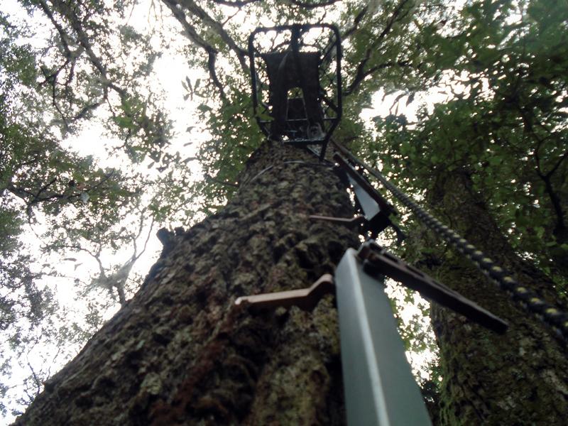 A treestand setup on Cumberland Island.