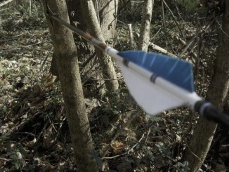 One of the author's arrows lodged in a sapling as a result of a miss.