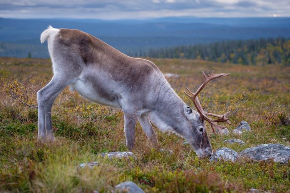 Pallas-Yllastunturi, Laponie Finlandaise