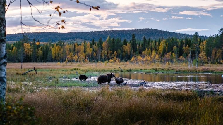 Kuusamo, Laponie, Finlande