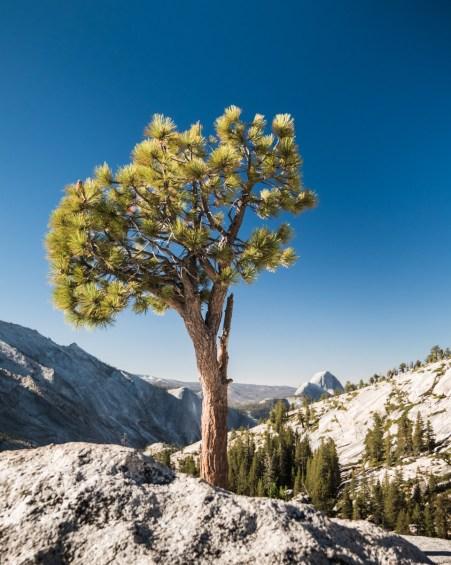 Olmsted Point, Yosemite, Californie