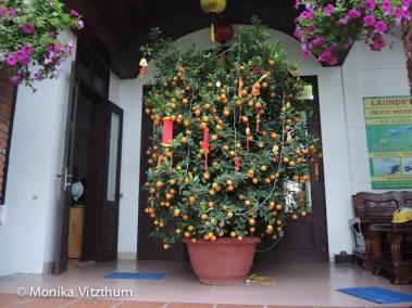 Vietnam_2020_Hoi_An-6625