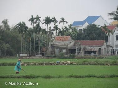 Vietnam_2020_Hoi_An-6679