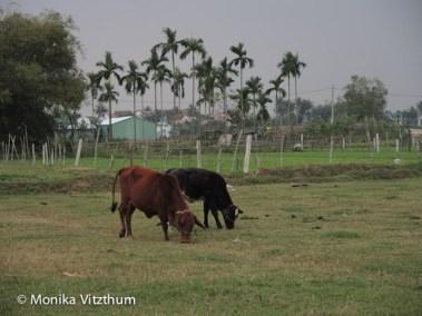 Vietnam_2020_Hoi_An-6698