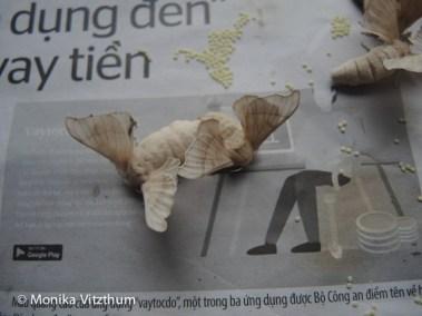 Vietnam_2020_Hoi_An-6749