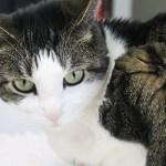 Miauw van je kat