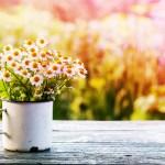 tips voor een lentetuin